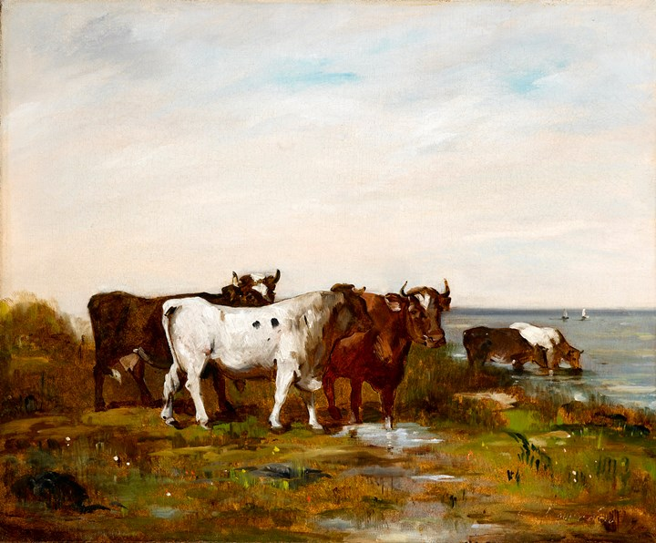 A bull and cattle in a landscape